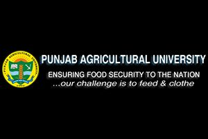 punjab-agriculture